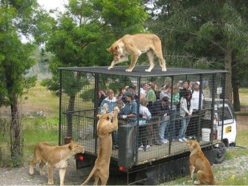 Reverse-zoo